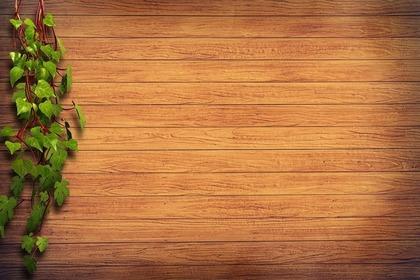 緑の這う板壁