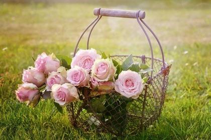 かごに入ったバラ