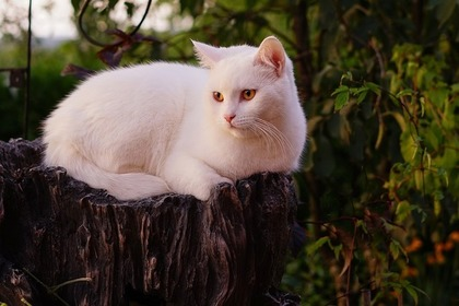 Middle white cat 52e4d7474f 1280