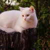 Small thumb white cat 52e4d7474f 1280