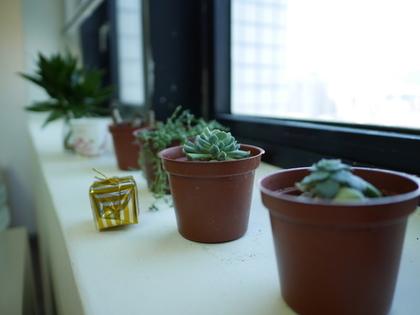 窓際に並んだ観葉植物