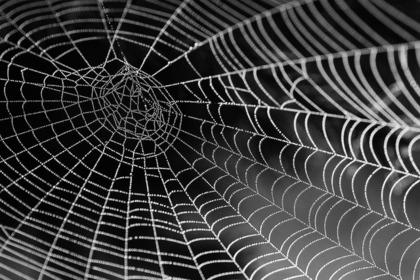 大きな蜘蛛の巣