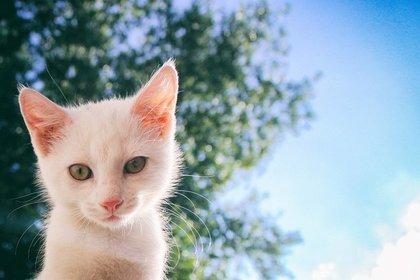 青空と白い猫