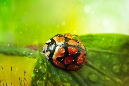 葉の上のてんとう虫