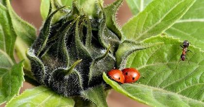 二匹のてんとう虫
