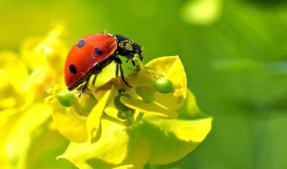 黄色い花とてんとう虫