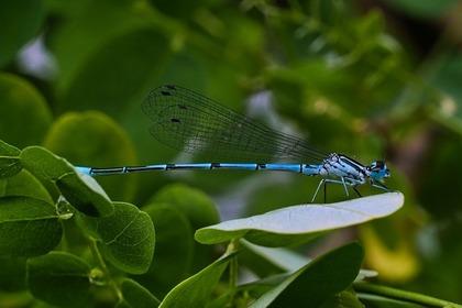 青いトンボ
