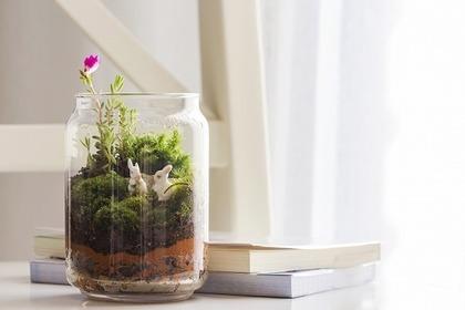 観葉植物と本
