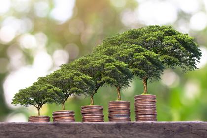 木とコインの成長