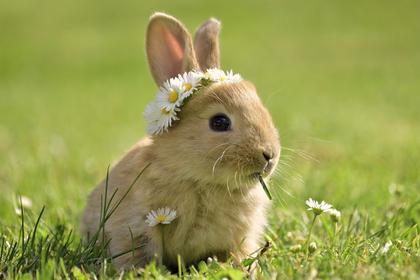かわいいウサギ