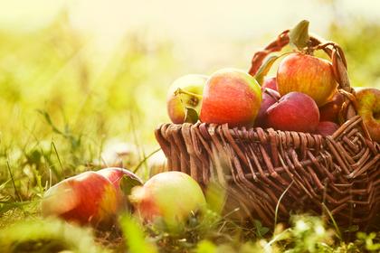 籠に入った林檎