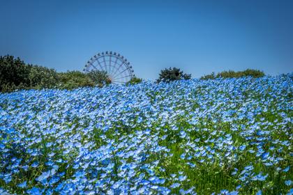 茨城県の公園