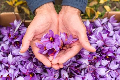 両手で花びらを抱える女性